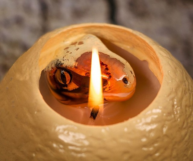 hatching-egg-candle-640x534