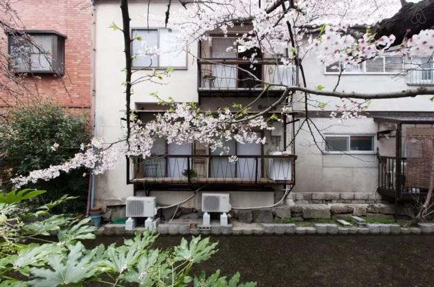 櫻花1-4